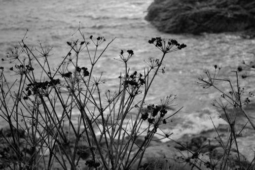 branche_ocean