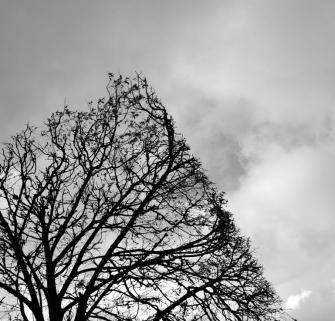 ciel_branches_parallele2