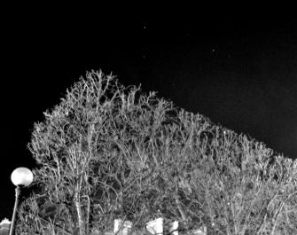 ciel_branches_parallele3