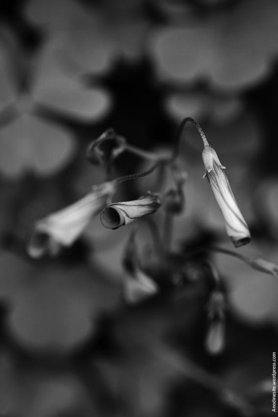 ephemere_automne_b