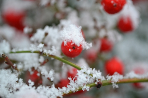 rouge_neige
