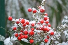rouge_neige2