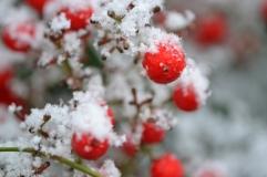 rouge_neige3