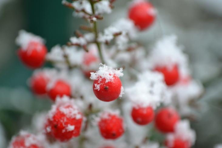 rouge_neige4