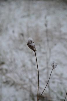 tige_neige4