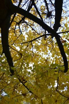 ciel_branches10