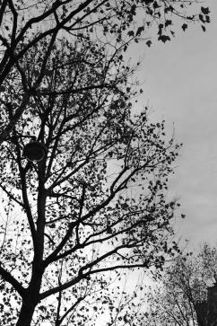 ciel_branches2