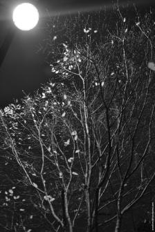ciel_branches_paris2