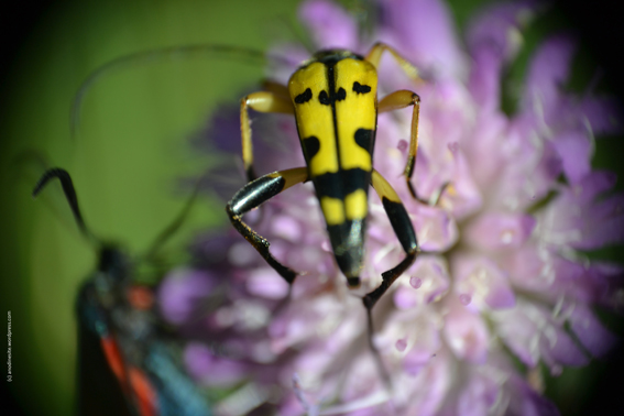 insecte1_web.jpg