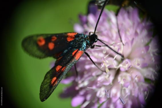 insecte2_web
