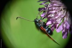 insecte3_web