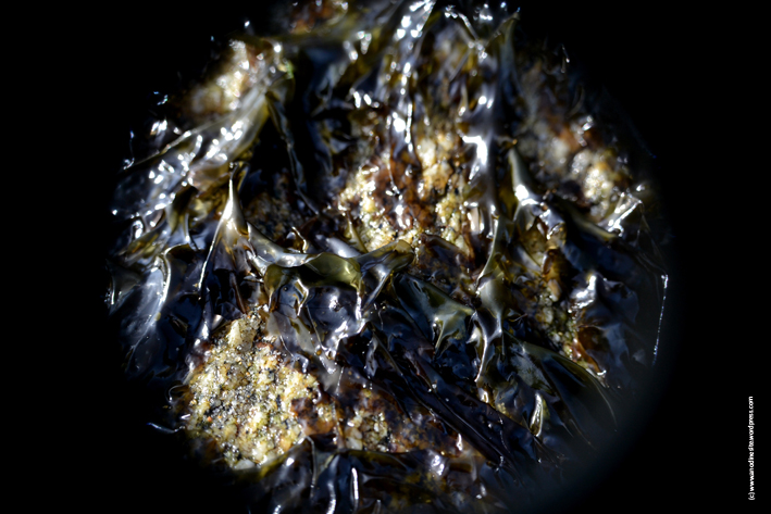 algues_web