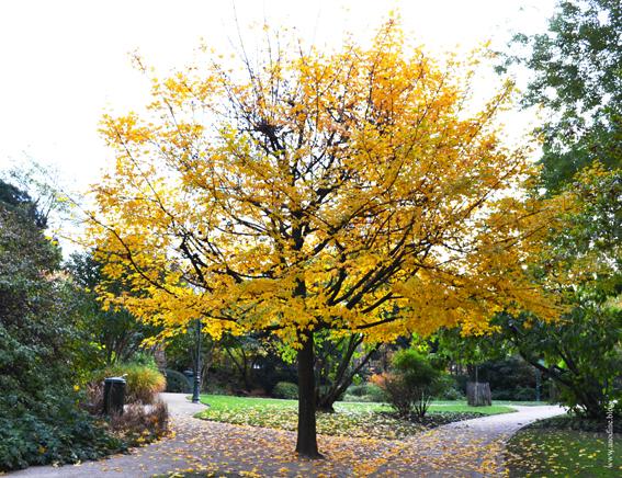 arbre5_web