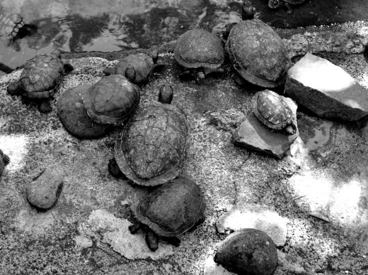 pierres_et_ecailles_web