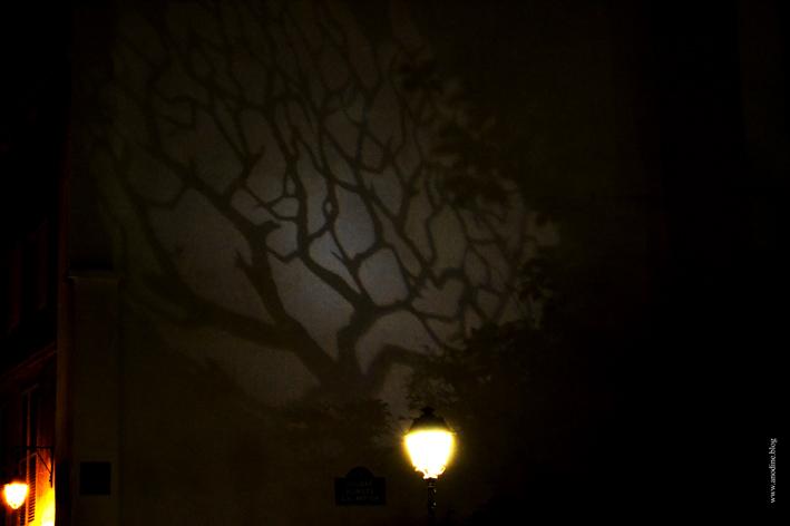 arbre_projete_web