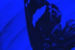 papillon_web_bleu_web