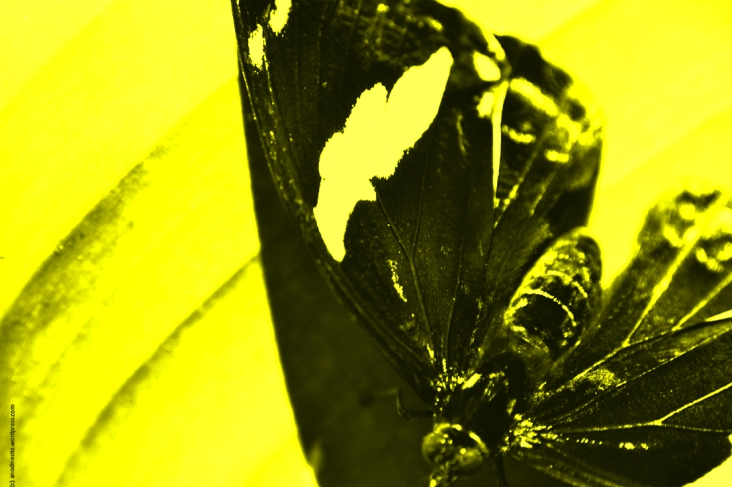 papillon_web_jaune_web