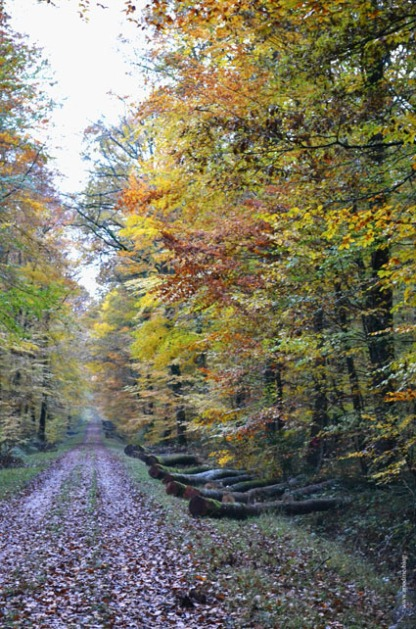 foret_loches2_web