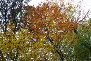 foret_loches3_web