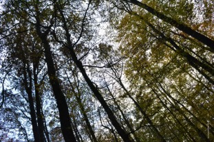 foret_loches4_web