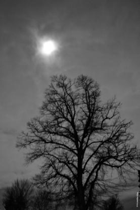 lune_arbre_web