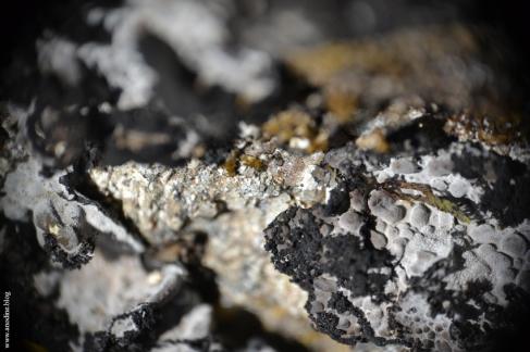lichen1_web