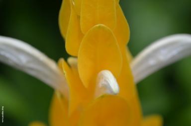 fleur_tropique3_web