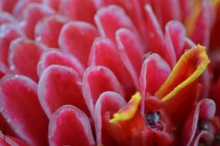 fleur_tropique4_web