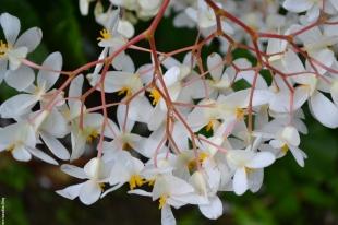 fleur_tropique5_web